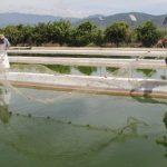 Michoacán, con gran potencial pesquero: Compesca