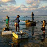 Acuicultura, carrera que potenciará la pesca en Michoacán: Compesca